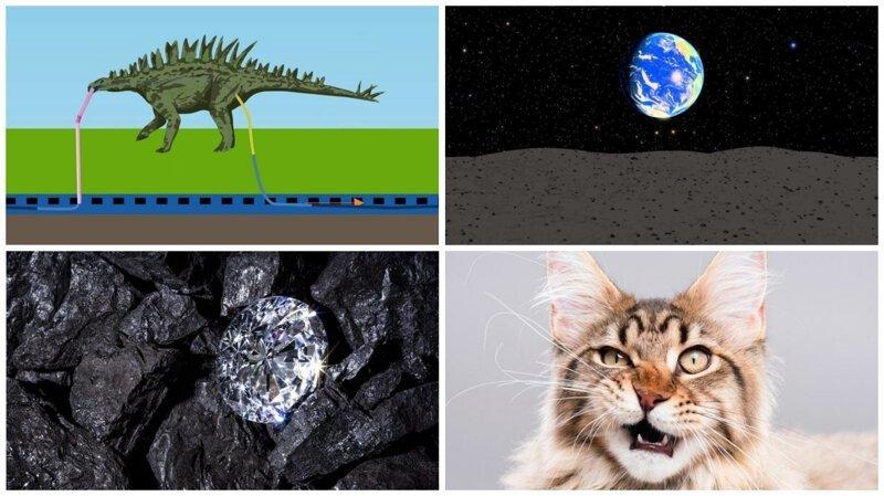 20 малоизвестных, но немаловажных фактов о нашем мире (21фото)