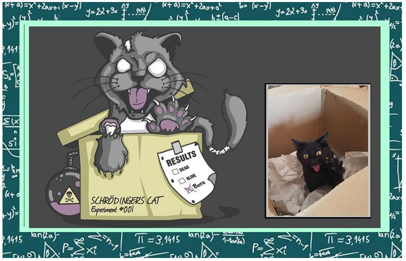 Кот Шредингера в коробке, который ни жив, ни мертв (31фото)