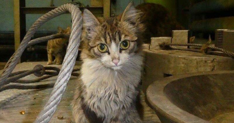 Коты-заводчане (13фото)