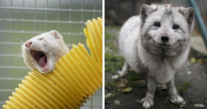 Животные, получившие вторую жизнь (31фото)